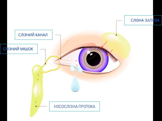 Ознаки синдрому сухого ока: чому течуть сльози?